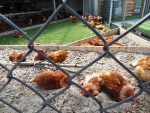 Rondeel Eieren